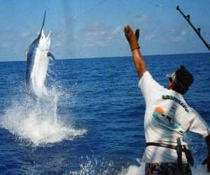 20150531210630-20ypc-pesca-aguja-cuba.jpg