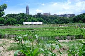 20151008210945-agricultura-habanera.jpg